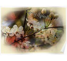 Spring Splendor - Spring Flowers Design Poster