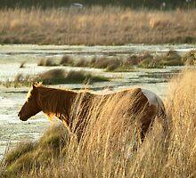 Spring Marsh by kimbarose