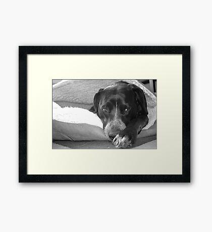 Teela in her pita bed. Framed Print