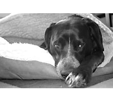 Teela in her pita bed. Photographic Print