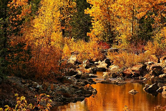 Sierra Gold by Barbara  Brown