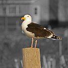Sitting by the dock in the bay by Jennifer Finn