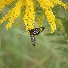 Butterfly by Gadam