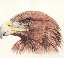 Golden Eagle by morgansartworld
