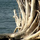 Early morning Sun and driftwood by Rosalie Scanlon