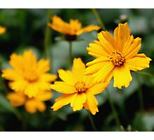 Yellow Flowers Macro Photographic Print