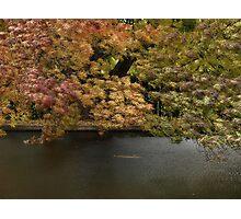 Autume The Salmon Ponds Tasmania April 2009 Photographic Print