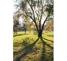 tree huge branches Photographic Print
