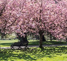Under A Cherry Blossom Tree by Claire Doherty