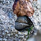 Giant Barnacle by Shannon Beauford