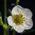 Strawberry rain by VickiOBrien