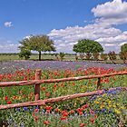 Spring in the Texas Hill Country by Bonnie T.  Barry