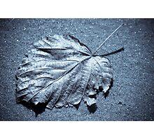 Selenium Leaf Photographic Print
