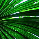 green lines by Tamara Cornell