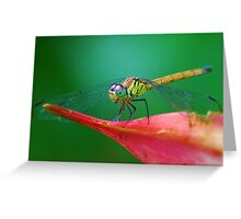 winged dragon Greeting Card
