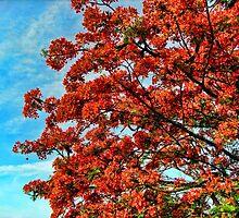 Orange Burst Tree Four by GolemAura