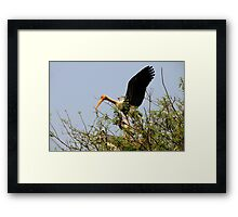 Painted Storks Framed Print