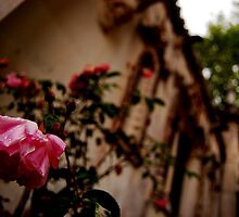 A flower graces my existence-The chapel at Quinta da Regaleira, Sintra Portugal by Wayne Cook