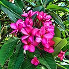 Strong Pink Saturate Two by GolemAura