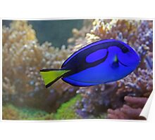 Blue fish:)) Poster