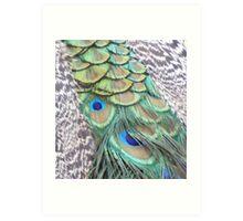 peacock feathers - at Launceston Gorge Art Print