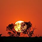 Sunset Behind Trees by lindsycarranza