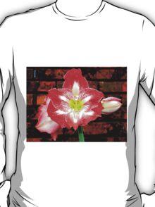 Amaryllis Allure T-Shirt