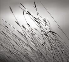 Prairie Grass by Pardus