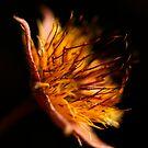 Firelight by Jenni77