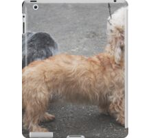 Well-trained Dandie Dinmont Terrier