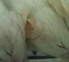 White Mice Sticker