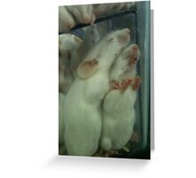 Snuggling White Mice Greeting Card