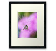 Dandelion bubble Framed Print