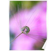 Dandelion bubble Poster