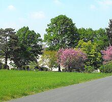 Trees in Spring by Bloodnok