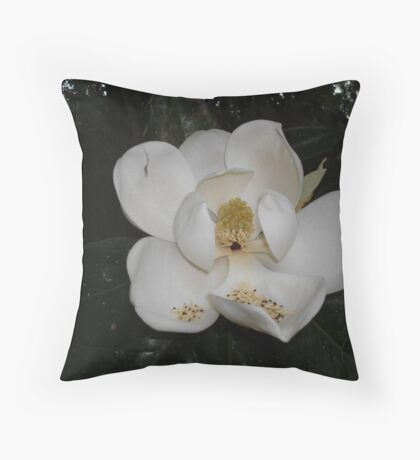 Southern Magnolia - first blossom Throw Pillow