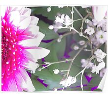 Baby Breath and Gerbera Poster
