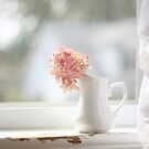 Pink Hydrangea, White Window by Kristybee