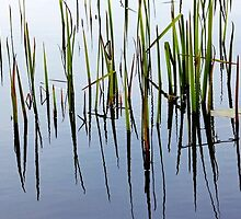 Life In The Shallows by Debbie Oppermann