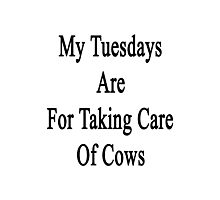 My Tuesdays Are For Taking Care Of Cows  Photographic Print