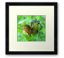 dandelion journey Framed Print
