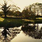A pond reflection... by Finbarr Reilly