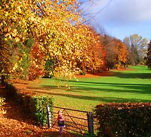colours of autumn by welshcake
