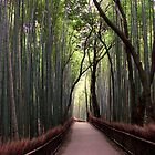 Bamboo Breathtaking by fenjay