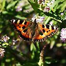 Sun kissed butterfly by Finbarr Reilly