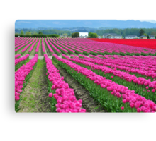 Pink Rows Canvas Print