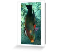 Parrot Fish & Cleaner Greeting Card