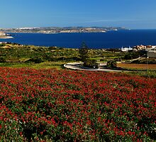 LEEDWAY TO MGARR HARBOUR ( GOZO ) by RayFarrugia