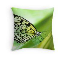white tree nymph butterfly (lat. idea leuconoe) Throw Pillow
