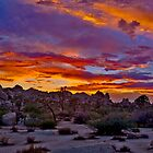 Joshua Tree Sunset 2 by photosbyflood